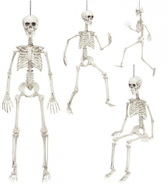 Bewegliches Skelett ° 90 cm